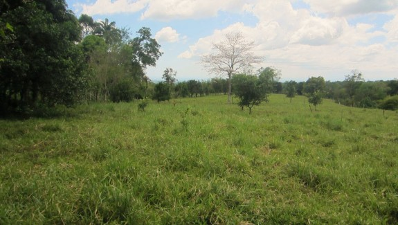 5 Acre Farm with Mountain Views and Cool Climate in Buena Vista, Chiriqui, Panama Real Estate