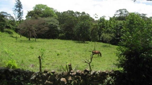 27 Acre Farm For Sale in El Frances, Boquete, Chiriqui, Panama Real Estate