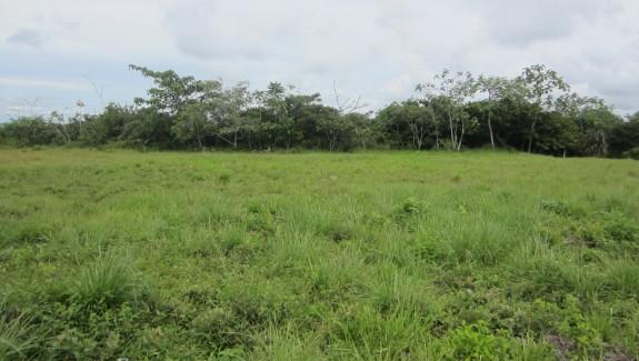 1/4 Acre Building Lots, El Frances, Boquete, Chiriqui, Panama